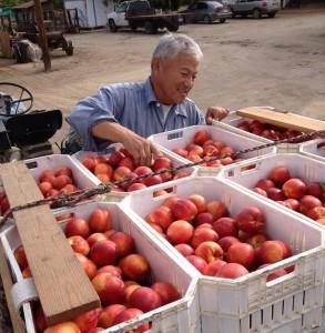 David Masumoto sustainable agriculture