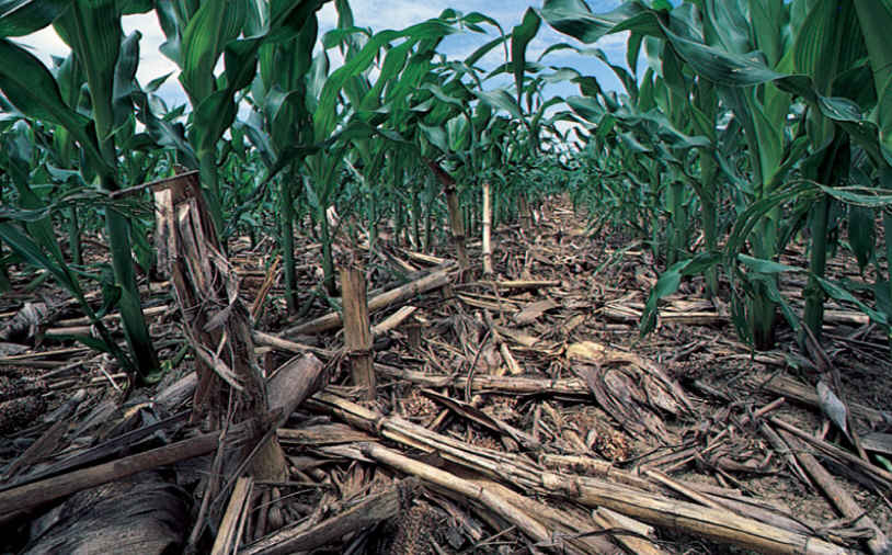 No-Till Farming Protects teh Soil