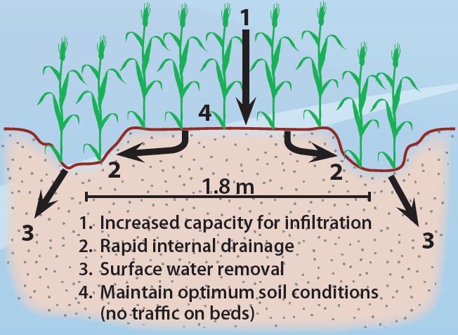 Raised Bed - Croos-section Diagram