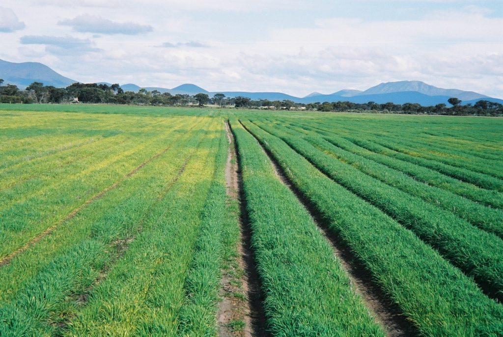 Small Grains on Raised Beds Australia