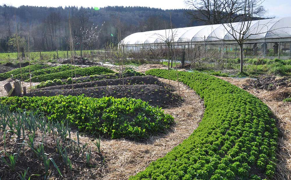 Permaculture and regenerative agriculture systems for Jardin en permaculture