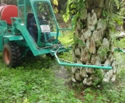 spraying Oil Palm