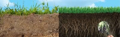 healthy soil vs compacted soil