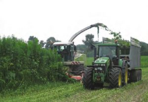 harvesting medicinal hemp with combine