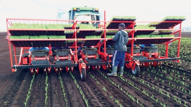 mechanical transplanter seating 6 workers
