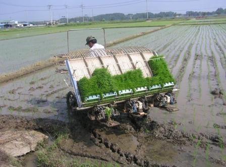 rice seedling transplanter