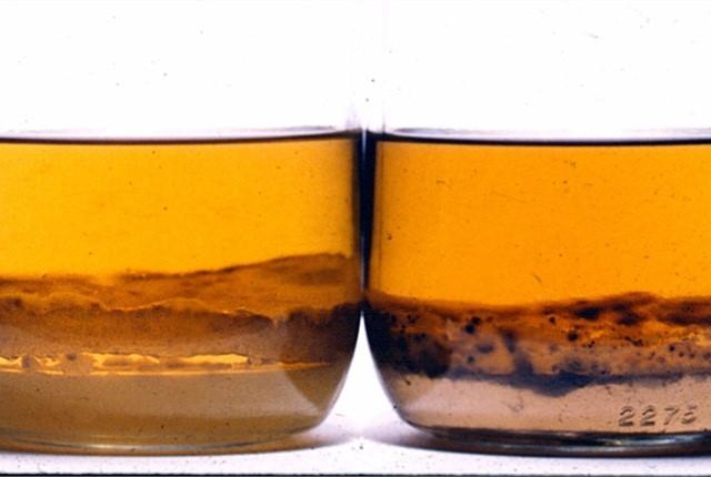 diesel bacteria sedimented